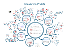 Chapter 28. Protists