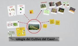 Tecnología del Cultivo del Caucho
