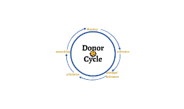 Donor Cycle
