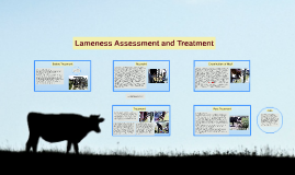 Lameness Assessment and Treatment