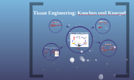 Tissue Engineering: Knochen und Knorpel