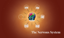 Ch. 7 The Nervous System