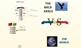 The Bald Eagle x The World