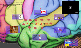 Copy of Nervous system