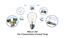 The 5 Characteristics of living things