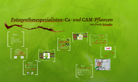 Spezialisten der Fotosynthese: C4- und CAM_Pflanzen