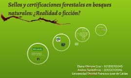 Sellos y certificaciones forestales en bosques naturales: ¿R