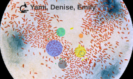 Copy of Yami, Denise, Emily