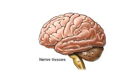 Nerve tissues