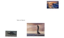 Aventura com Nessie