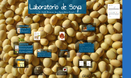 Copy of Laboratorio de Soya