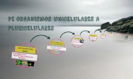 dE UNICELULARES A PLURICELULARES