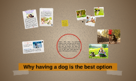 Why adopting dogs is the best option