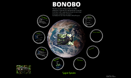 The Bonobo
