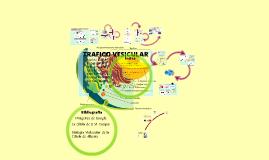 Copy of tráfico vesicular en la célula