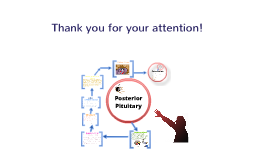 Posterior Pituitary/Hypothalamus