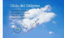 Ciclo oxigeno