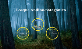 Bosque Andino-Patagónico ( continuación )
