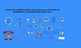 PRODUCCIÓN Y COMERCIALIZACIÓN  DE Oreochromis aureus EN TANQ
