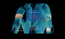 Copy of enfermedades musculares