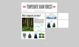 TEMPERATE RAINFOREST