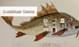 Copia de Guadalupe Gaona
