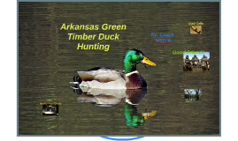 Arkansas Green Timber Duck Hunting