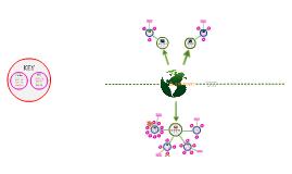Biodiversity Mind Map