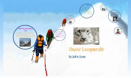 Snow Leopards by Caitlin Clonan