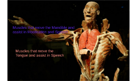 Muscles that move the Mandible and assist in Mastication and