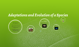Adaptations and Evolution of a Species 2015