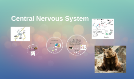 Copy of Central Nervous System