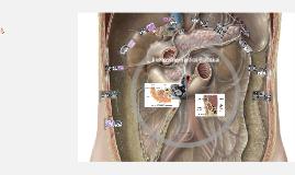 A retroperitoneum cysticus elváltozásai