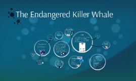 The Endangered Killer Whale