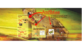 Anfíbios (Amphibia)