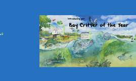 Bay Critter of the Year