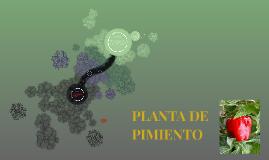 PLANTA DE PIMIENTO
