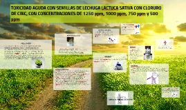 Copy of TOXICIDAD AGUDA CON SEMILLAS DE LECHUGA LACTUCA SATIVA CON C