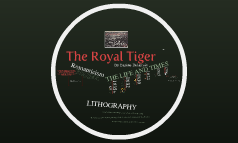 Tigre Royale
