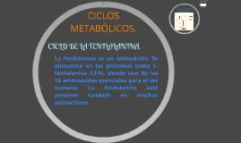 CICLOS METABÓLICOS