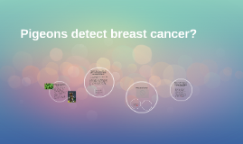Copy of Pigeons detect breast cancer?
