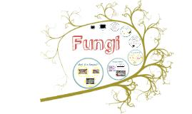 Chapter 17 (part 2): Fungi