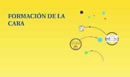 Copy of FORMACIÓN DE LA CARA