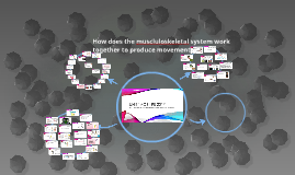How does the muscluloskeletal system work together to produc