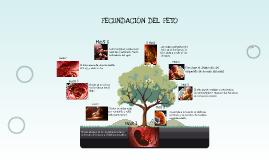 desarrollo del feto humano