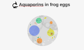 Aquaporins in Frog eggs