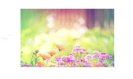 Copy of Garden Project
