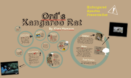 Endangered Species Assignment: Ord's Kangaroo Rat