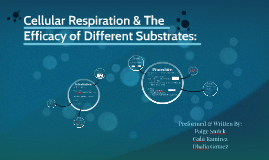 Cellular Respiration: The Efficacy of Different Substrates