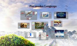 Pteranodon Longicep